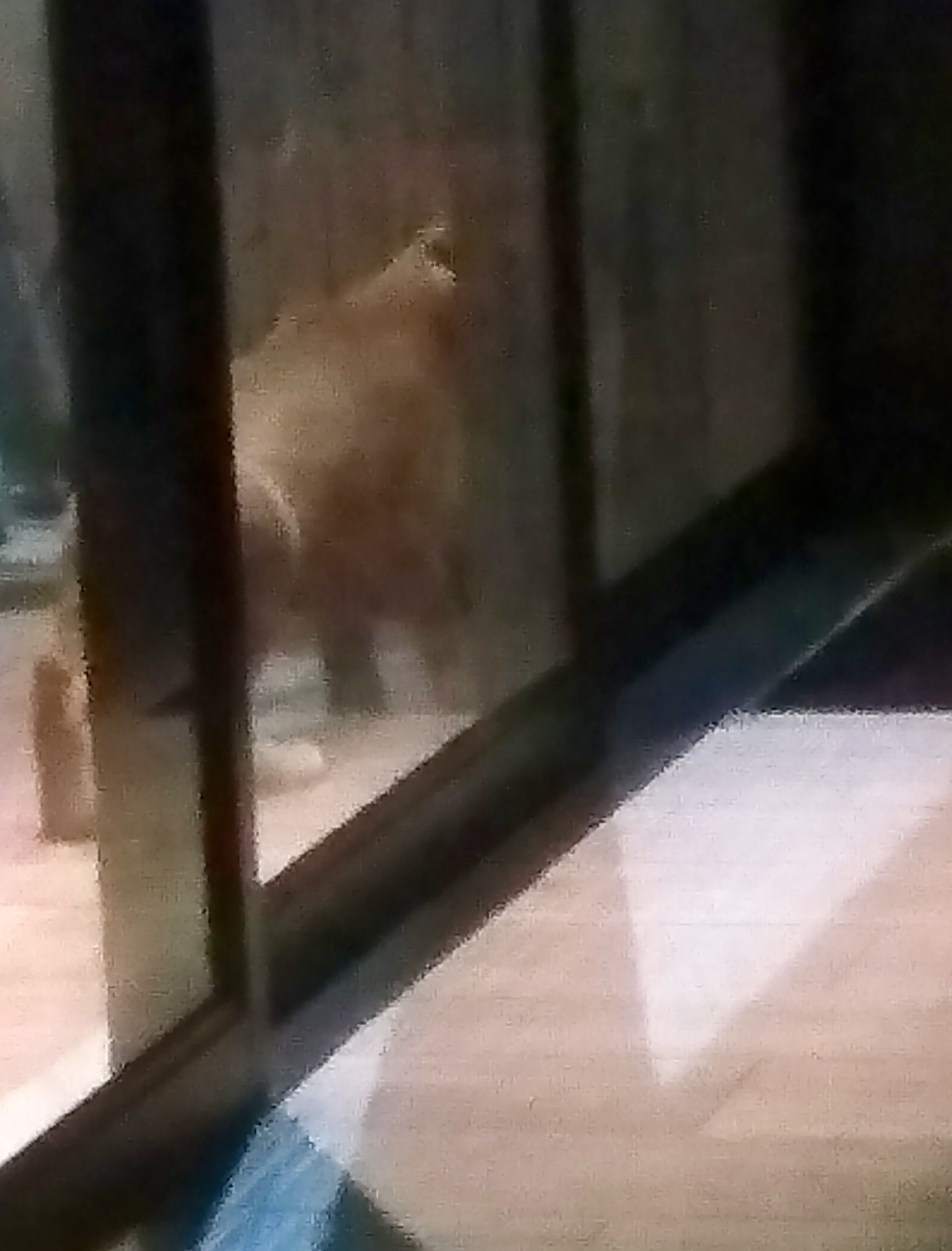 Caracal at the door